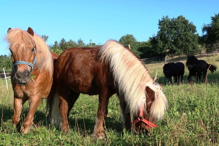 Ponyführen entfällt am 23.09.2018