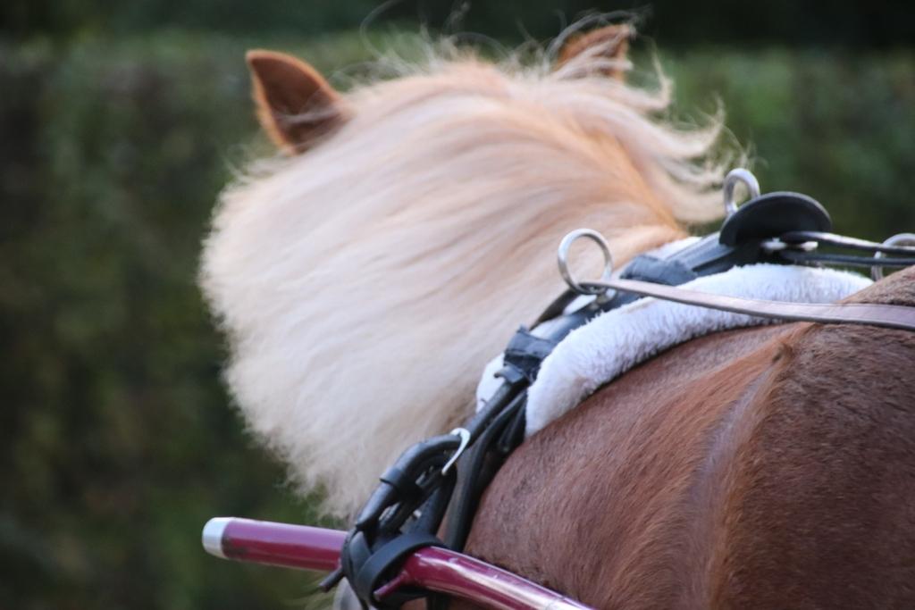 Ponyführen entfällt am 09.02.2020