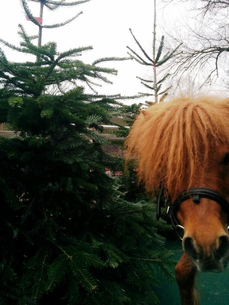 Weihnachtsbaumverkauf ab dem 28.11.2020